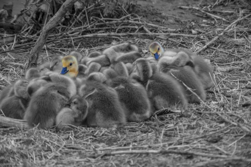 2014-June-S-3-Above_the_crowd