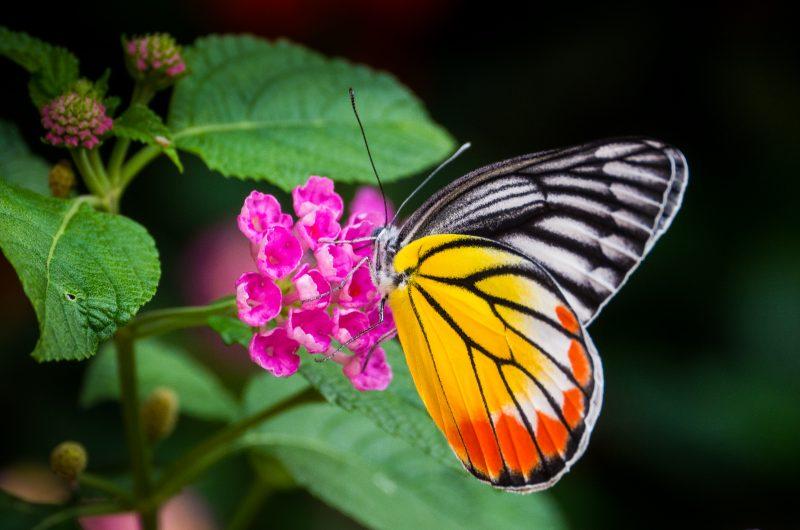 2014-June-s-2-Butterfly