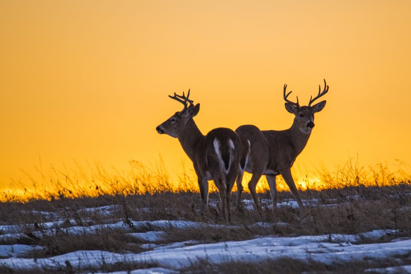 Brothers under sunset by Charles Tam